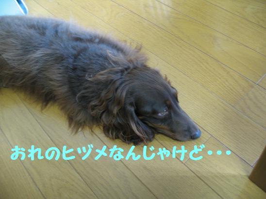 c0123115_16593323.jpg