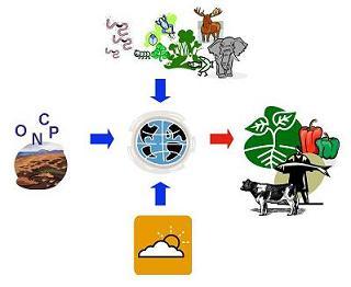 Ecosystem Serivces - 地球はどうして生産キャパオーバーなのか_b0069365_1465724.jpg