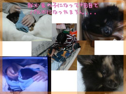 b0078073_22415191.jpg