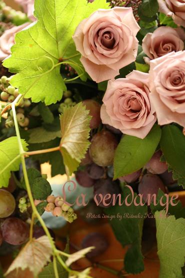 La vigne_f0127281_2355814.jpg
