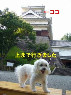 f0145192_1650392.jpg