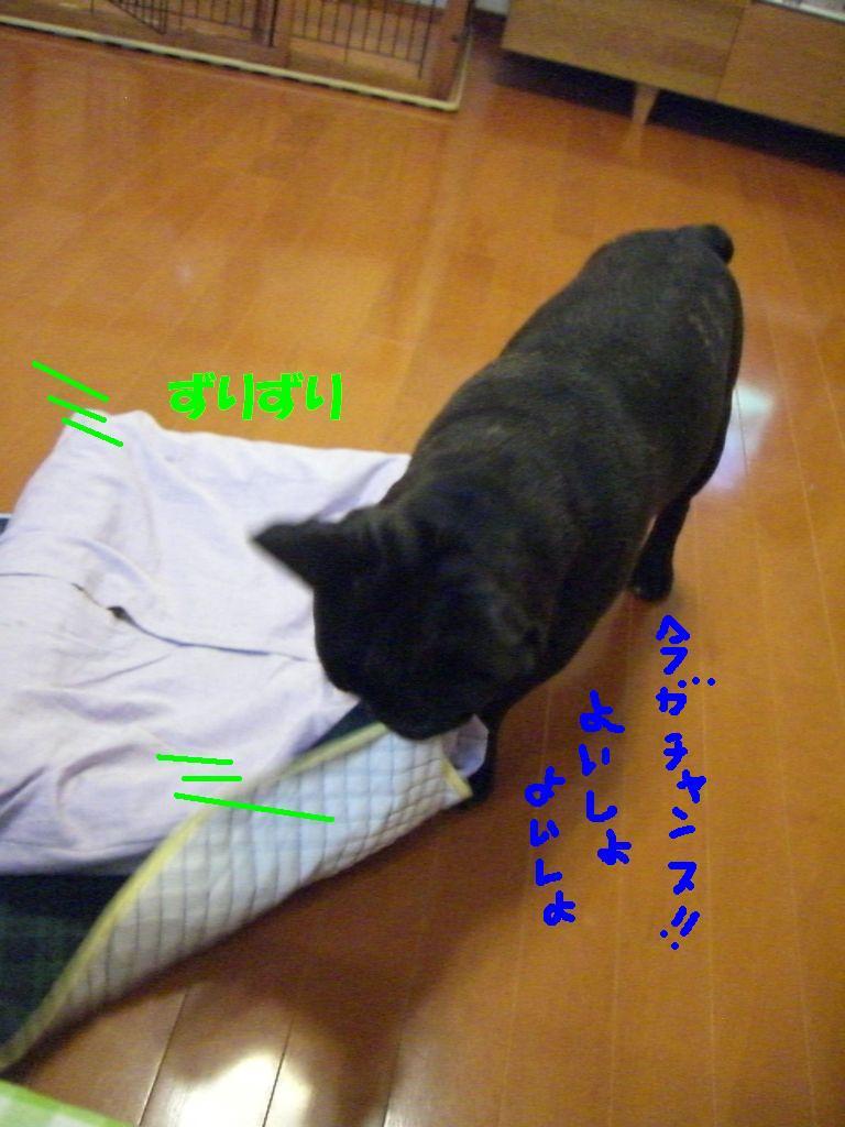 c0113109_18262629.jpg