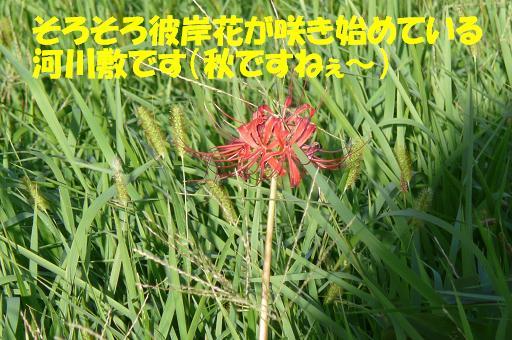 f0121712_11444740.jpg