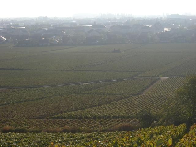 フランスから・・収穫日記♪_e0025817_2222930.jpg