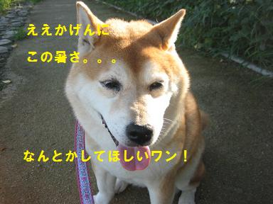 c0049950_1061462.jpg