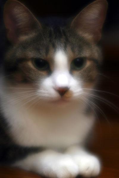 猫ポートレート#1_b0081177_21131263.jpg