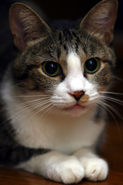 猫ポートレート#1_b0081177_21232713.jpg