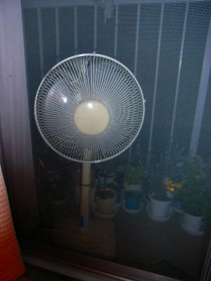扇風機はお外_e0114895_17565922.jpg