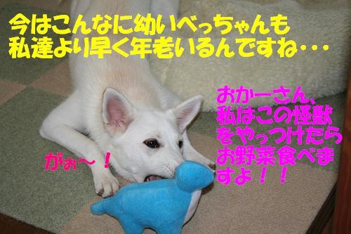 f0121712_1025973.jpg