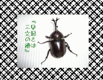 b0085815_1959598.jpg