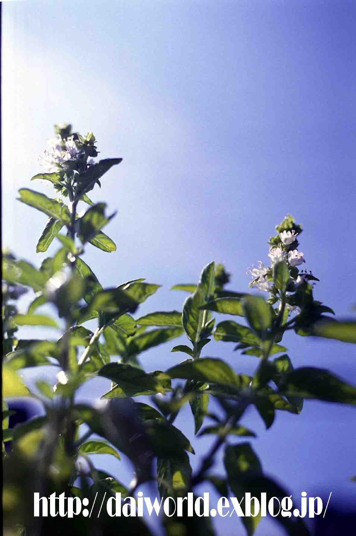 収穫_c0136419_23171653.jpg