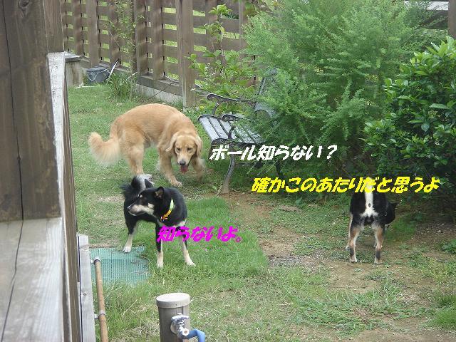 f0114128_1332419.jpg