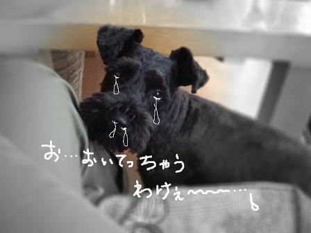 f0141130_10542632.jpg