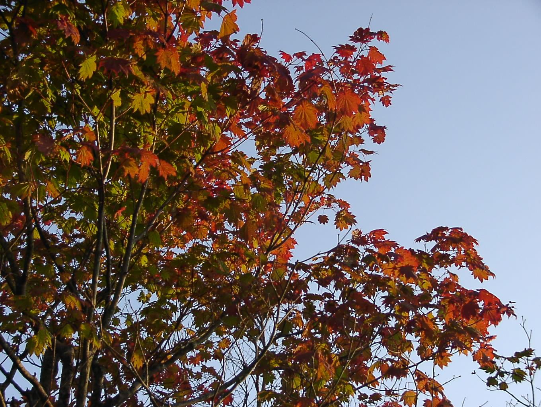 秋のあしおと    9月18日_f0113639_23134115.jpg