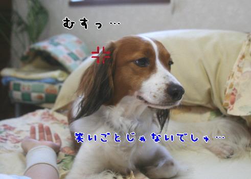 d0013149_036158.jpg
