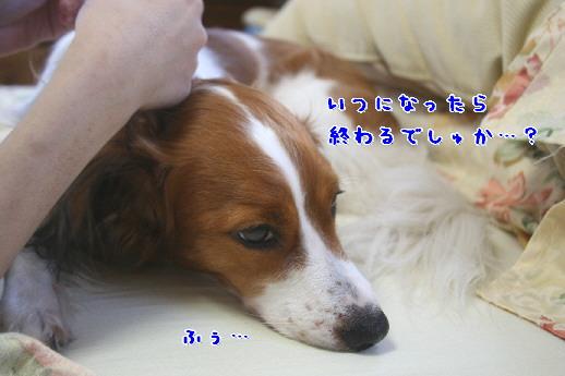 d0013149_1245627.jpg