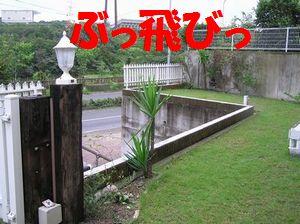 a0090451_1614867.jpg