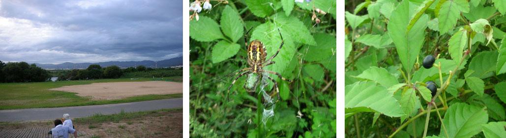北河内自然愛好会 9月「虫の声観察」例会_e0090670_22151037.jpg