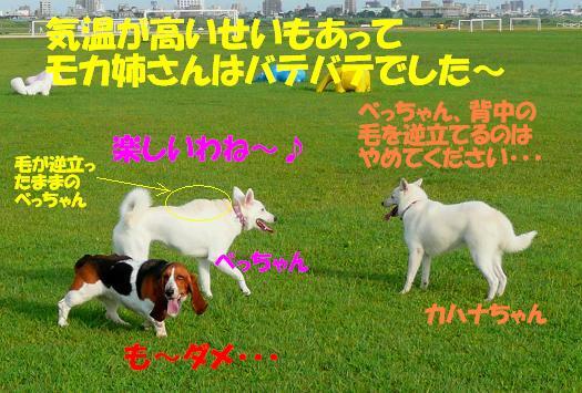 f0121712_9433221.jpg