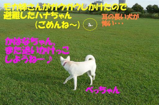 f0121712_943395.jpg