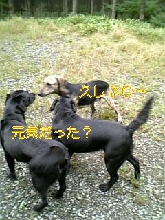 f0148927_19322526.jpg