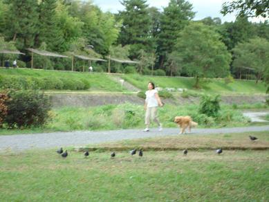 鴨川の犬達 in 京都_c0099133_1341250.jpg