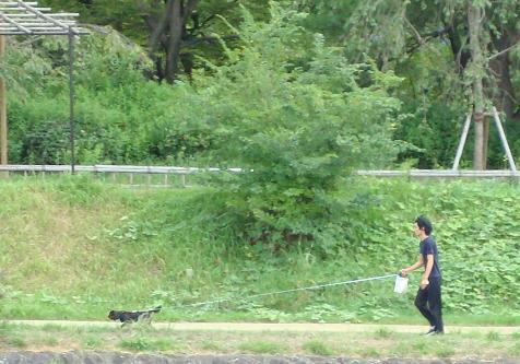 鴨川の犬達 in 京都_c0099133_135129.jpg