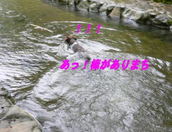 d0013645_1746637.jpg
