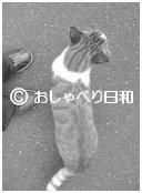 e0104869_0253659.jpg