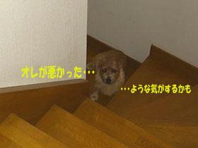 d0043478_0363392.jpg