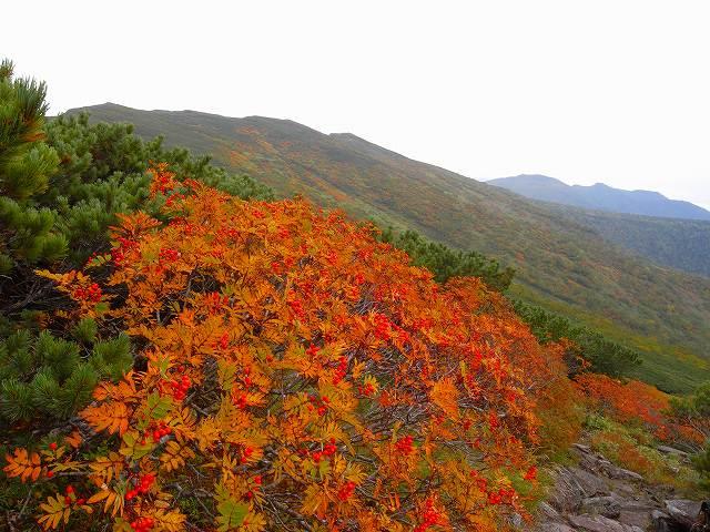 9月17日、平山登山その1_f0138096_1343253.jpg