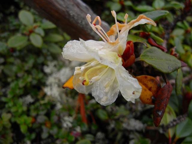 9月17日、平山登山で見た花など_f0138096_22171689.jpg
