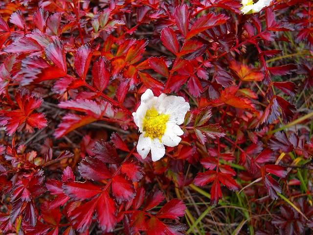 9月17日、平山登山で見た花など_f0138096_22183066.jpg