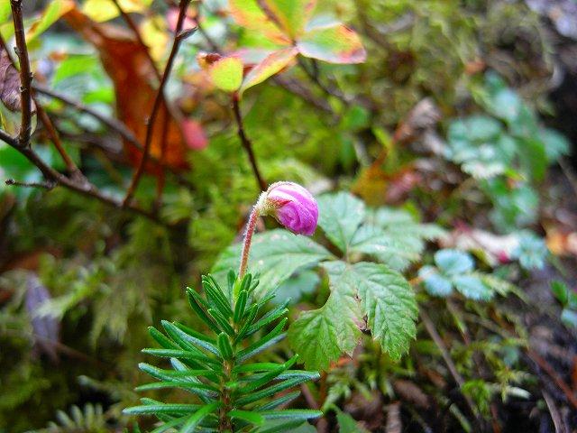 9月17日、平山登山で見た花など_f0138096_22271442.jpg