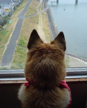 「犬連れへんろ」 はじめに ・ 第1話_c0049299_19574100.jpg