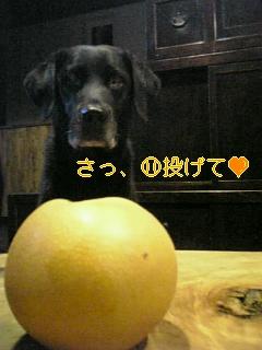 梨_f0148927_19383288.jpg