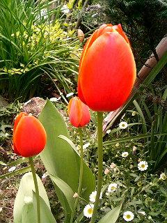 華(花)もだんごも_a0103940_1242125.jpg