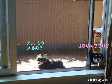 まだ暑い_d0006467_2257317.jpg