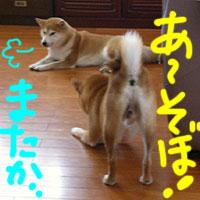 b0057675_16105956.jpg