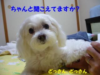 f0145192_15525971.jpg