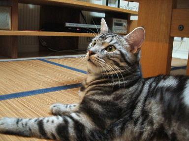 ネコ、大絶賛!_b0114004_21435431.jpg