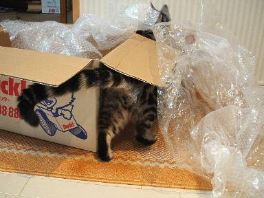ネコ、大絶賛!_b0114004_21442493.jpg