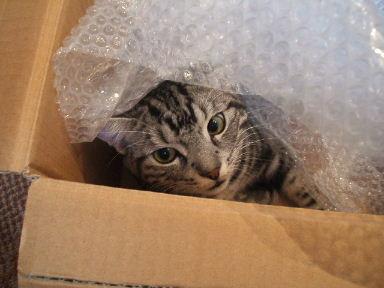 ネコ、大絶賛!_b0114004_2144502.jpg