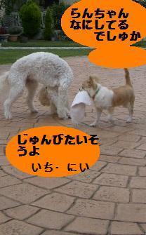 c0132205_11291995.jpg