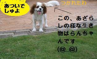 c0132205_11301947.jpg