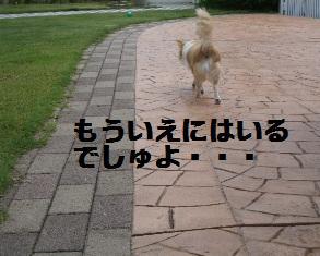 c0132205_1131567.jpg