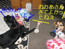 d0104209_20101295.jpg