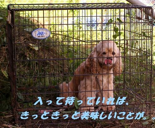 b0067012_2137847.jpg