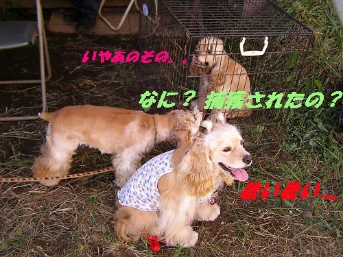 b0067012_2220580.jpg