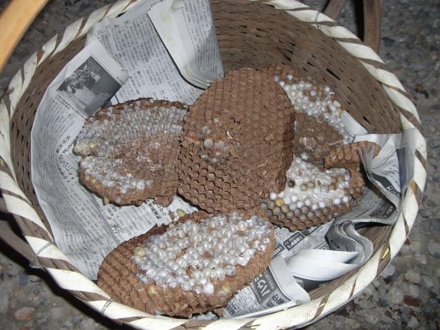 蜂の巣ハンター_f0111415_0563961.jpg